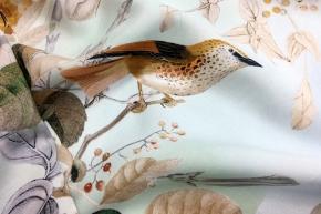 Seidenjavanese - Vögel