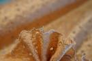 Madeira-Stickerei - nude