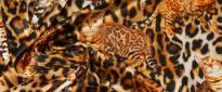 Seidenstretch - Katzen