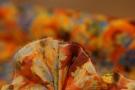 Baumwolle - blau mit orange