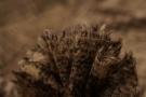 Mohair mit Alpaca - braun
