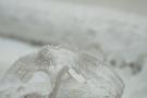 Rest Spachtelspitze - großes Blütenmuster