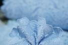 Spitzenborte - hellblau, 55 cm