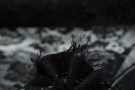 Gimpenspitze - schwarz